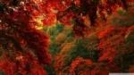 بذربونسای و درختان خزان کننده