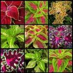 یذر گلها  و گیاهان تزیینی