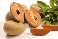 بذر درختچه ساپودیلا sapodilla