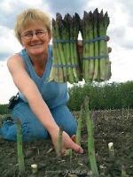 بذر مارچوبه درجه یک asparagus