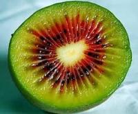 بذر کیوی توسرخ kiwi