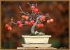 بذر بونسای Japanese flowering crabapple
