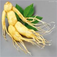بذر جنسینگ کره ای Panax ginseng
