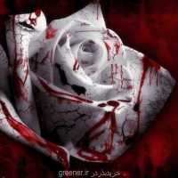 بذر رز شهید white blood rose