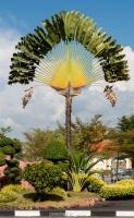 بذر درخت نخل ماداگاسکار Ravenala madagascariensism