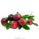بذر کرنبری cranberry
