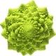 بذر کلم رومی Romanesco broccoli