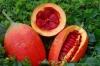 بذر ابرمیوه gac superfruit