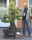 بذر درختچه دار تالاب taxodium